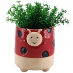 Flower pot - Summer Collection - Ladybug