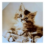 Framework kitten canvas