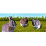 Bookmark Lenticular Rabbit